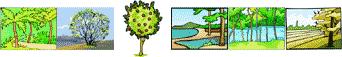 Pattern set image